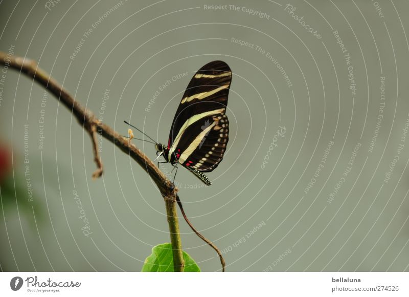 White Green Beautiful Plant Animal Leaf Black Brown Wild animal Exceptional Natural Sit Elegant Esthetic Wing Branch