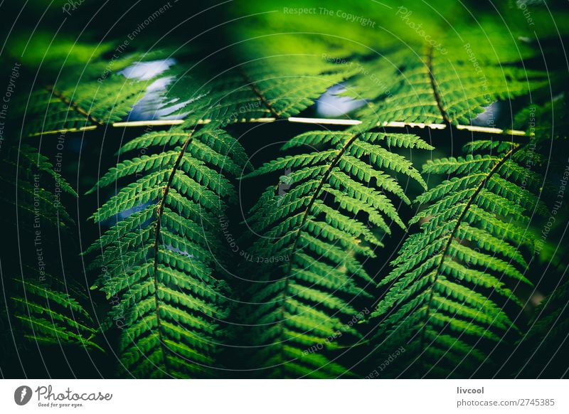 fern in the dark II Life Nature Plant Elements Tree Fern Forest Virgin forest File Dark Wet Cute Green Black Emotions Distress Adventure Contentment Colour Bud