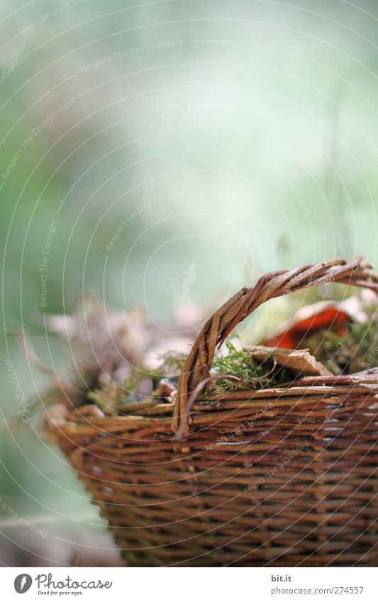A basket for autumn... Environment Nature Plant Autumn Moss Garden Park Decoration Stand To dry up Old Brown Green Moody Transience Basket Autumn leaves