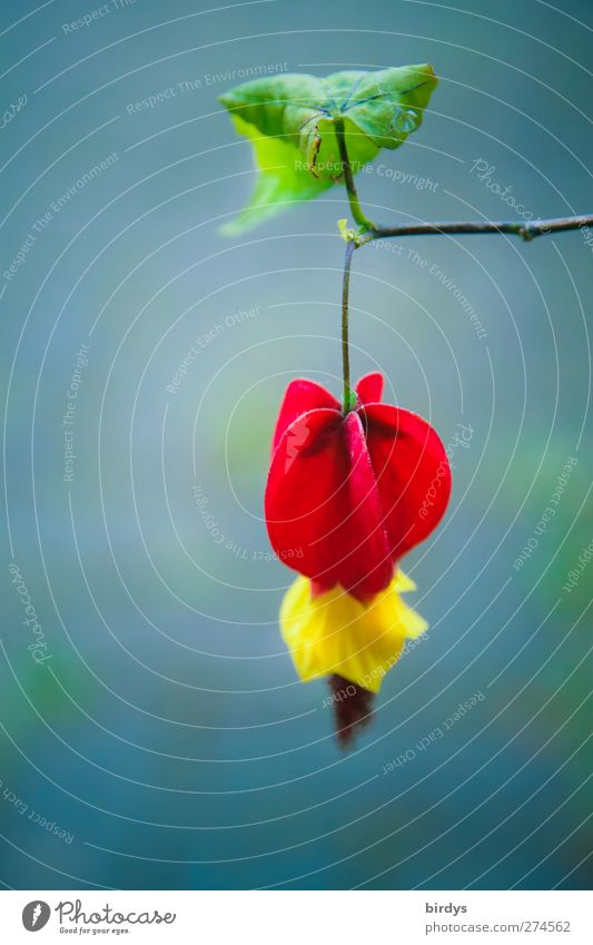 Nature Blue Green Beautiful Summer Plant Red Leaf Yellow Spring Blossom Esthetic Illuminate Branch Blossoming Fragrance