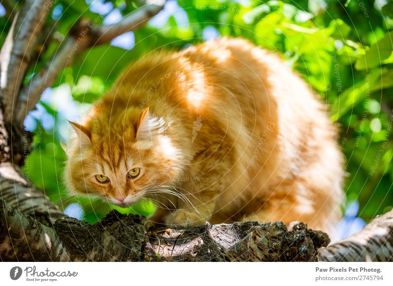 cat in a tree Animal Pet Cat Animal face Pelt Paw 1 Baby animal Crouch Hunting Study Sit Beautiful Cute Ginger Colour photo Exterior shot Close-up Deserted