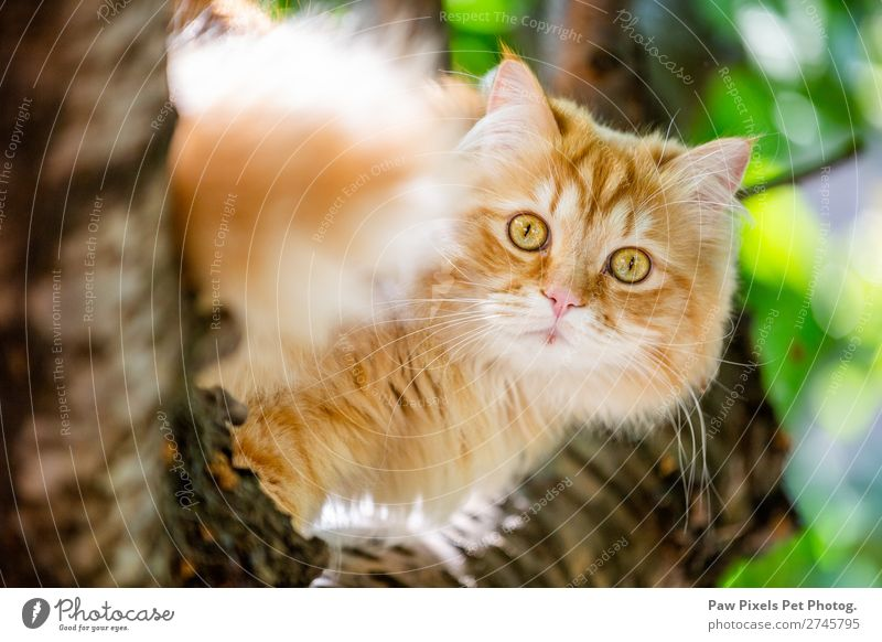 Cat in a tree. Animal Animal face Pelt 1 Sit Yellow Gold Green Orange Majestic Kitten Persian cat persian Scared Strange Stuck Colour photo Exterior shot