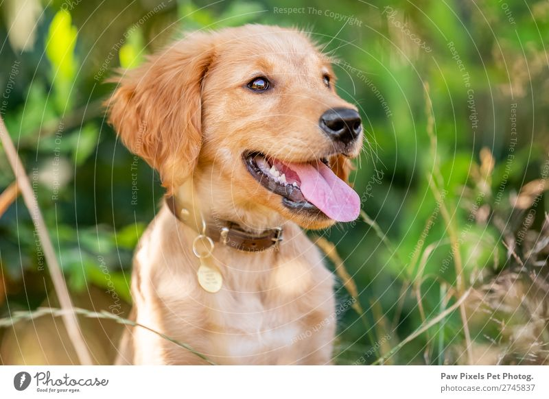 puppy face portrait Spring Summer Autumn Beautiful weather Plant Tree Flower Grass Bushes Moss Garden Park Meadow Field Forest Animal Pet Dog Animal face Pelt 1