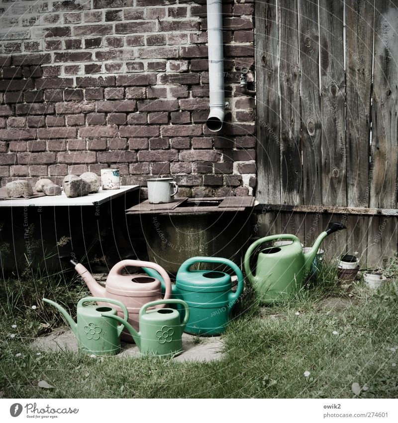 waiting for the flood Grass Garden Wall (barrier) Wall (building) Brick Downspout Eaves Conduit Watering can Stone Wood Plastic Stand Wait Sustainability