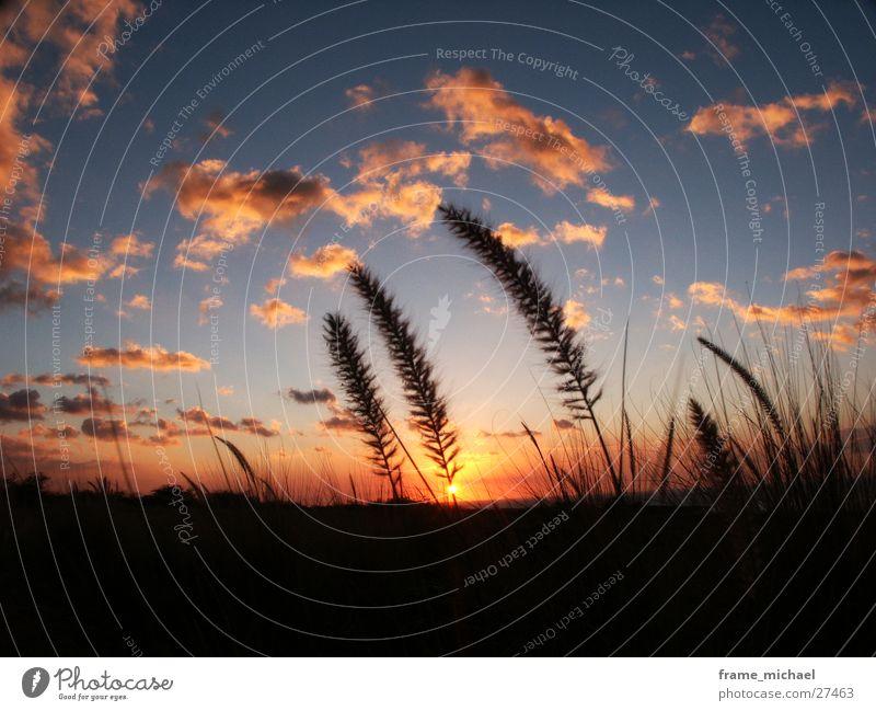 evening sun Sunset Field Hawaii Physics Clouds Dusk Warmth