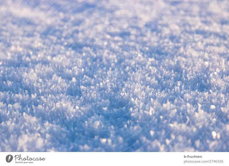 snow, snow crystals Winter Snow Ice Frost Observe Discover Glittering Free Fresh Cold Beautiful Blue Calm Snow crystal Macro (Extreme close-up) Ground level