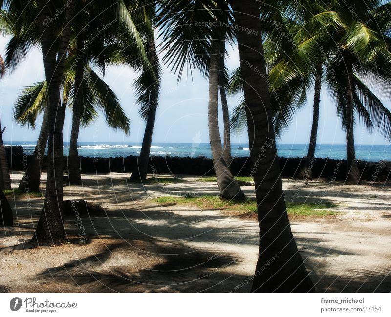 beach Beach Palm tree Caribbean Sea Hawaii Polynesia Center