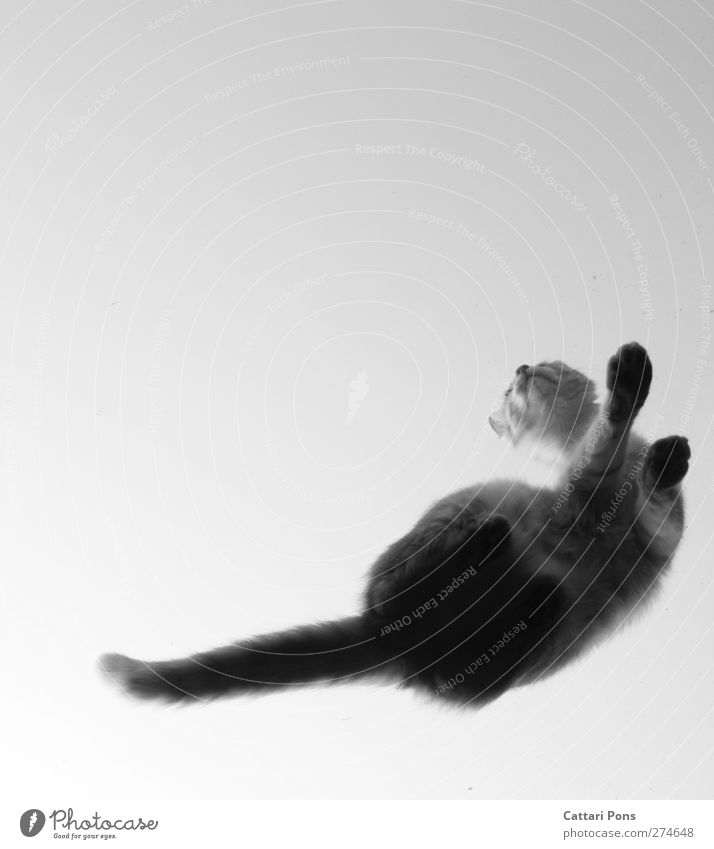 Cat Animal Above Glass Exceptional Sit Authentic Observe Uniqueness Touch Pelt Under Make Pet Paw Tails