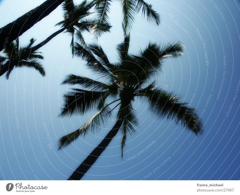 palms Palm tree Caribbean Sea Hawaii Sun Midday