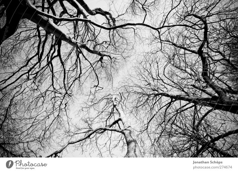 Sky Nature Tree Winter Forest Environment Cold Autumn Gray Park Esthetic Perspective Beautiful weather Branch Creepy Treetop