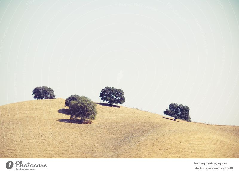 cinco amigos [LIII] Agriculture Forestry Nature Landscape Summer Plant Tree Field Hill Sierra de Grazalema Andalucia Spain 5 Mediterranean Steppe Colour photo
