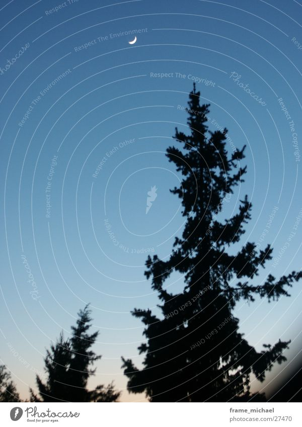 evening sky Sunset Progress Tree Evening Moon