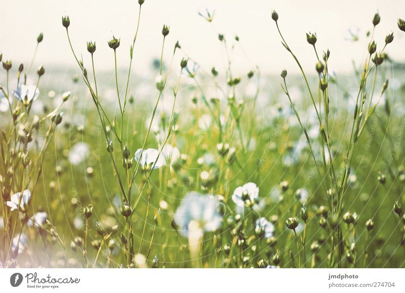Sky Nature Blue White Green Summer Plant Flower Leaf Environment Spring Blossom Field Growth Illuminate Blossoming