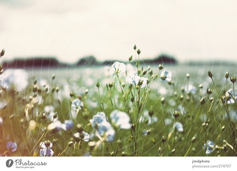 Sky Nature Blue White Green Summer Plant Flower Leaf Environment Spring Grass Blossom Air Horizon Field