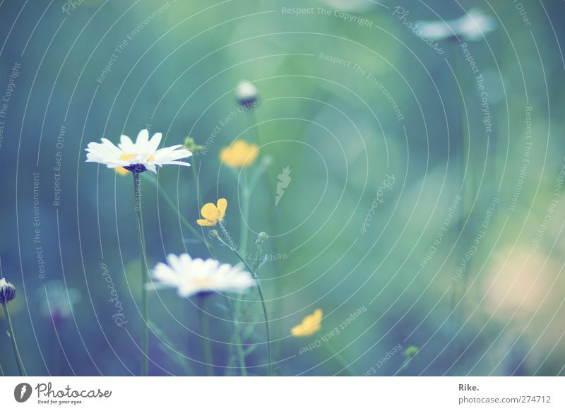 Nature Beautiful Summer Plant Flower Environment Meadow Spring Blossom Moody Contentment Natural Glittering Free Growth Esthetic