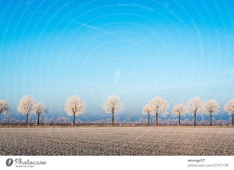 Winter landscape with hoarfrost Environment Nature Landscape Plant Horizon Beautiful weather Ice Frost Tree Field Edge Street Cold Blue Brown White
