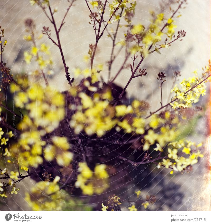 I don't know what's blossoming here. Environment Nature Plant Spring Summer Flower Leaf Blossom Park Blossoming Fragrance Faded To dry up Growth Negative Bud