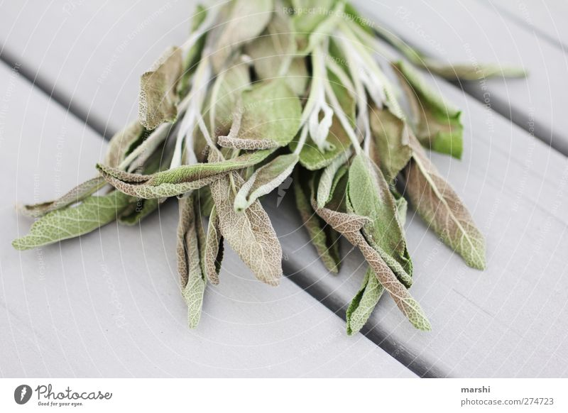 Nature Green Plant Leaf Gray Healthy Health care Bushes Herbs and spices Shriveled Healing Aromatic Sage