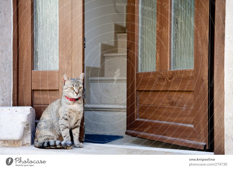 waking cat Stairs Door Animal Pet Cat 1 Stone Wood Observe Sit Cuddly Soft Guard Entrance Tiger skin pattern Colour photo Subdued colour Exterior shot Detail