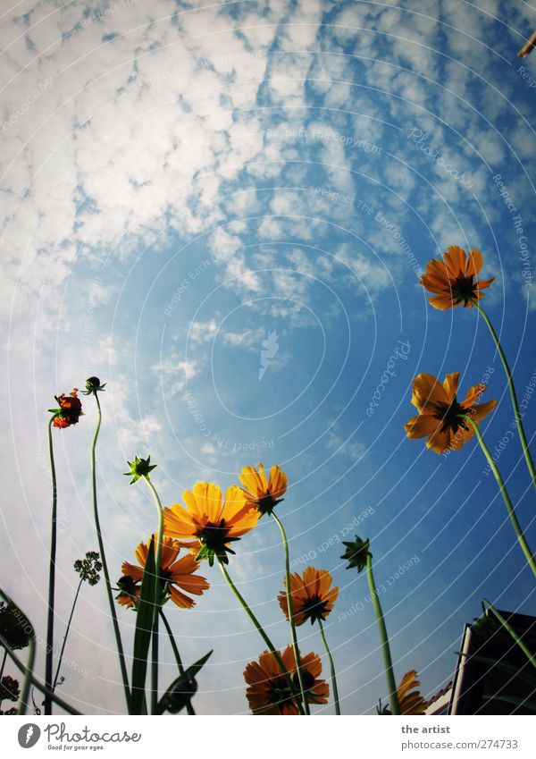 Sky Nature Blue Vacation & Travel White Summer Plant Flower Clouds Relaxation Environment Yellow Blossom Leisure and hobbies Free Beautiful weather