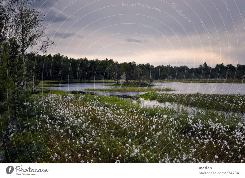 The white lake Landscape Plant Clouds Summer Beautiful weather Tree Grass Bushes Lakeside Bog Marsh Gray Green Subdued colour Exterior shot Deserted