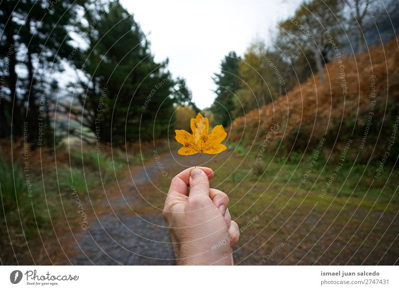 hand with yellow leaf Leaf Yellow Nature Abstract Consistency Exterior shot background Beauty Photography fragility Autumn fall Winter