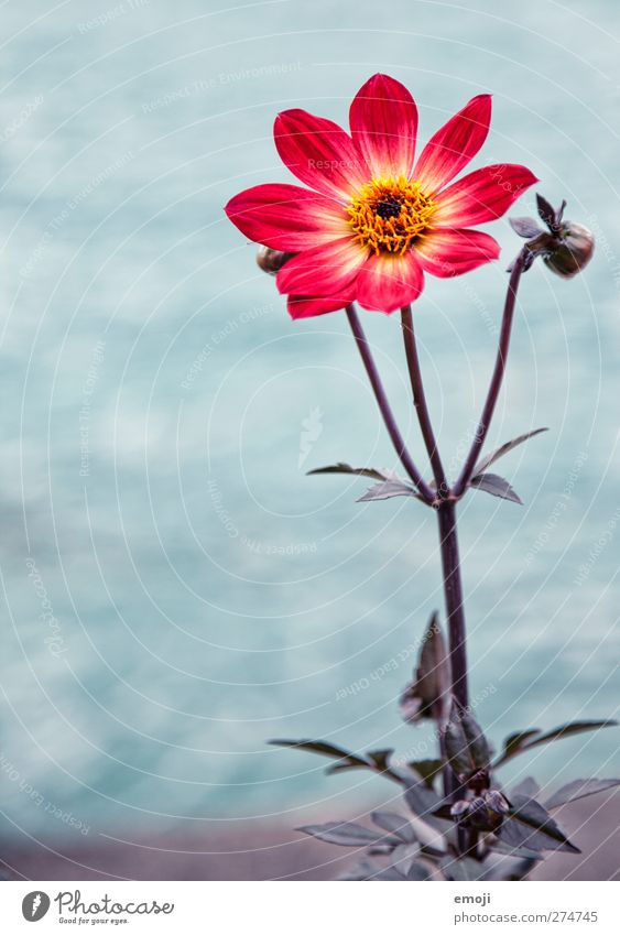 one for you Nature Plant Flower Leaf Blossom Natural Red Colour photo Exterior shot Close-up Deserted Day Shallow depth of field