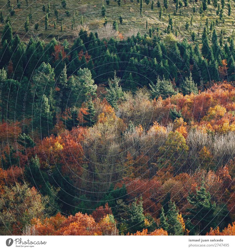 trees in the mountain Mountain Tree Colour colorful Forest Nature Landscape Exterior shot Vacation & Travel Places Destination Autumn fall background Calm