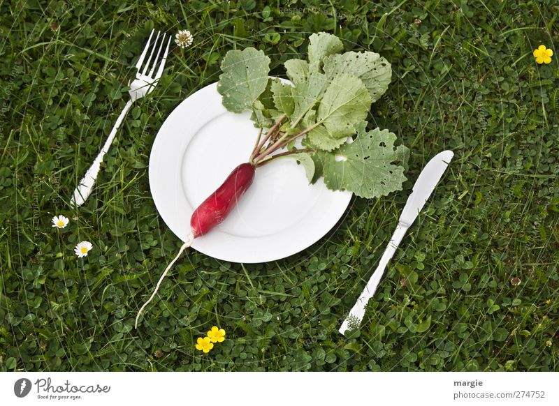 Radish diet: A radish on a white plate with a knife and fork in a meadow Food Vegetable Lettuce Salad Nutrition Breakfast Dinner Picnic Vegetarian diet Diet