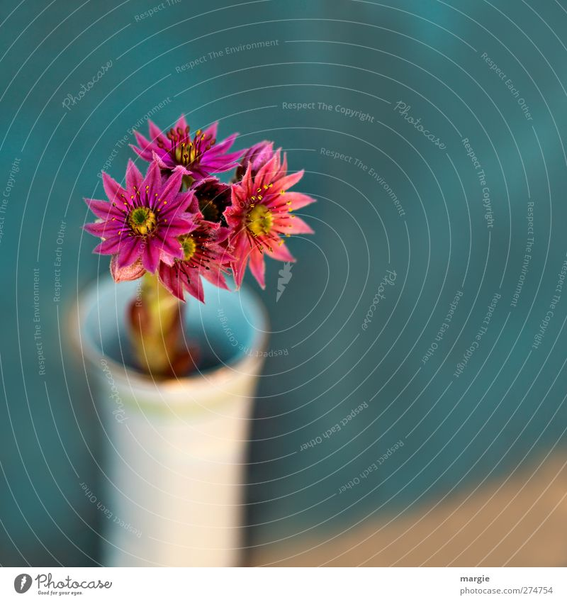 Sharp flowers in a fuzzy vase Environment Nature Plant Flower Leaf Blossom Blossoming Fragrance Growth Fresh Decoration Flower stalk Vase Bouquet pretty Blue