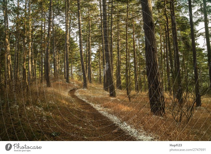 forest path Environment Nature Landscape Plant Sky Clouds Autumn Winter Climate Weather Snow Tree Grass Bushes Leaf Foliage plant Wild plant Meadow Forest Hill