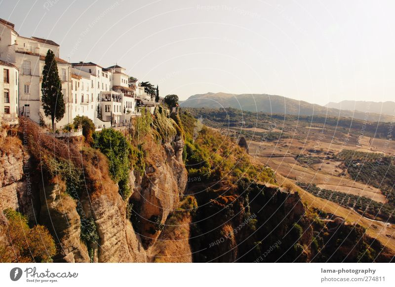 Ronda [LIV] Tree Bushes Hill Rock Canyon Andalucia Spain Outskirts Old town Populated House (Residential Structure) Tourist Attraction Landmark Exceptional Tall