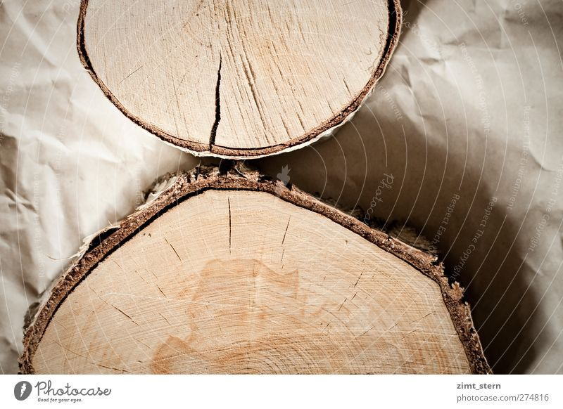 birch rings Craftsperson Forester Joiner Tree Paper Wood Old Authentic Natural Round Dry Brown Birch tree wooden disc Annual ring Wrinkled Subdued colour