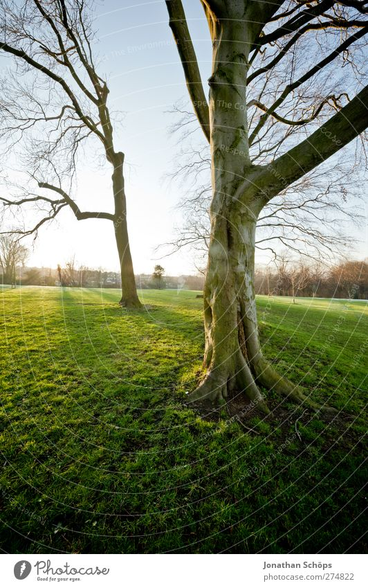 Nature Green Sun Tree Relaxation Calm Environment Emotions Meadow Freedom Park Leisure and hobbies Illuminate Esthetic Perspective Beautiful weather