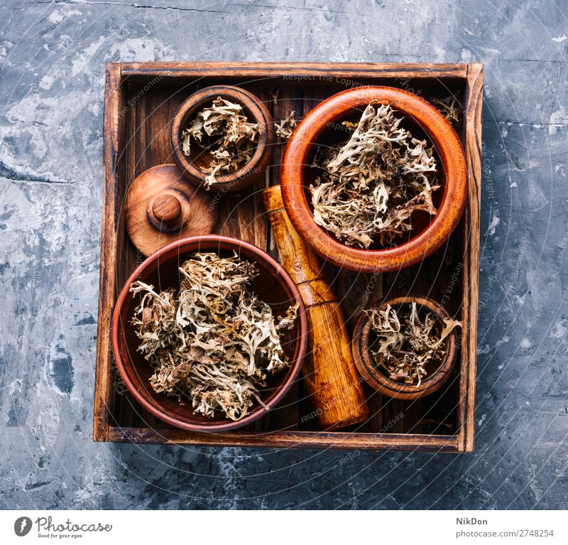 Dried Iceland moss herb medicine Icelandic Icelandic moss natural medicine medicine herb herbal medicine plant lichen treatment box flower alternative medicinal