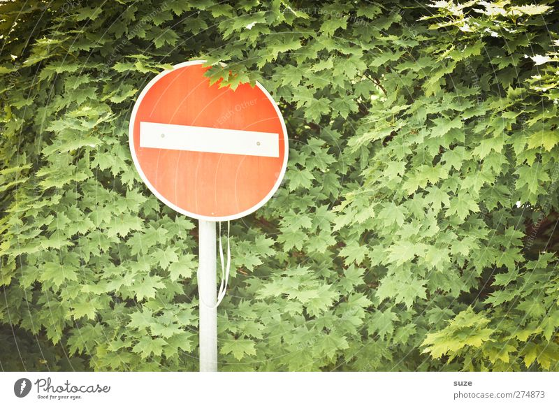 Nature Green Red Leaf Environment Growth Transport Sign Treetop Bans Graphic Warning sign Road sign Prohibition sign One-way street