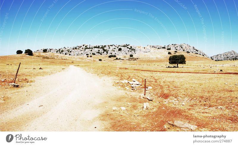 Nature Tree Sun Landscape Street Mountain Lanes & trails Sand Rock Climate Hot Dry Drought Steppe National Park