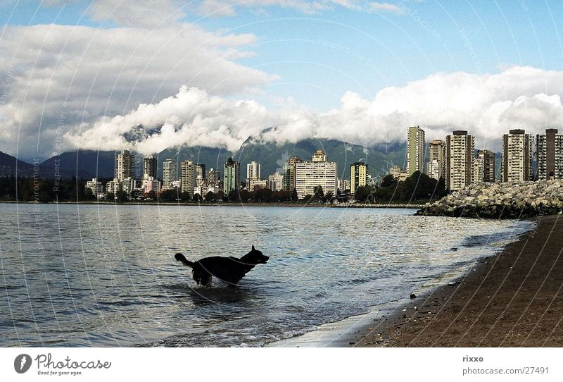 Water Beach Dog High-rise Swimming & Bathing Skyline Bay Canada Vancouver North America British Columbia Clouds in the sky Mountain cloud