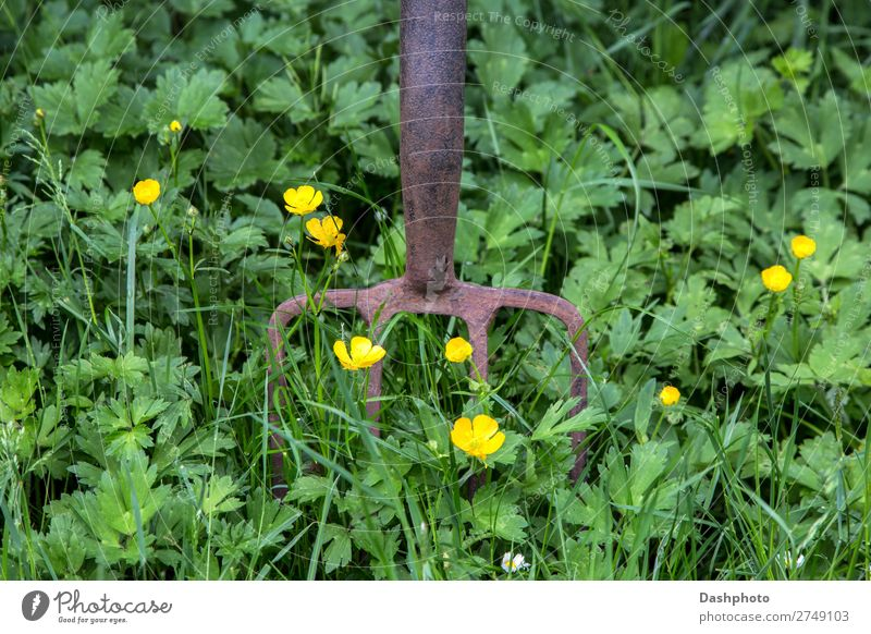 Rusting Garden Fork with Weeds and Wild Flowers Leisure and hobbies Gardening Tool Environment Nature Earth Spring Summer Grass Meadow Old Yellow Green
