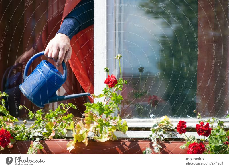 what water wants Human being Senior citizen Life Arm Hand 1 Environment Nature Spring Beautiful weather Flower Watering can Blue Growth Cast Window box