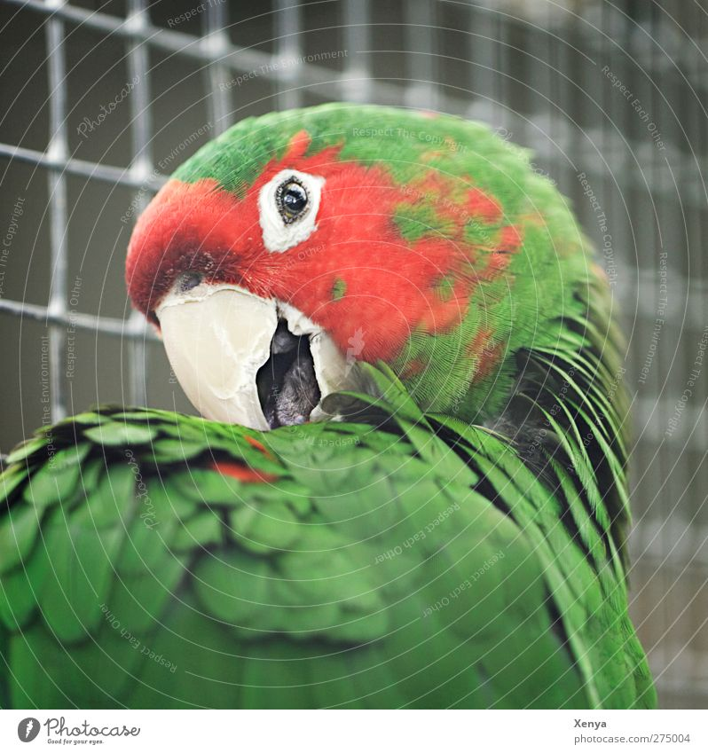 parrot Animal Bird Animal face Zoo Parrots 1 Exotic Brash Curiosity Green Red Colour photo Exterior shot Close-up Deserted Day Light Shallow depth of field