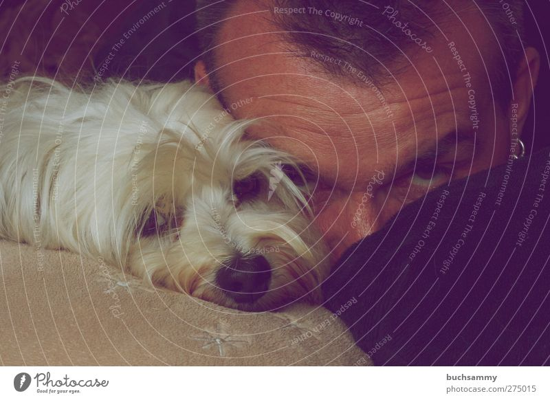 Man with Havanese Human being Animal Pet Dog 1 Love Lie Esthetic Together Cute White Emotions Self portrait Colour photo Interior shot Portrait photograph