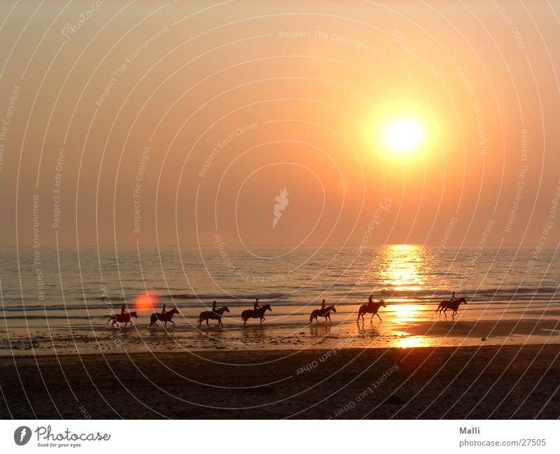 the kings horses Atlantic Ocean Sunset Horse Beach Rider