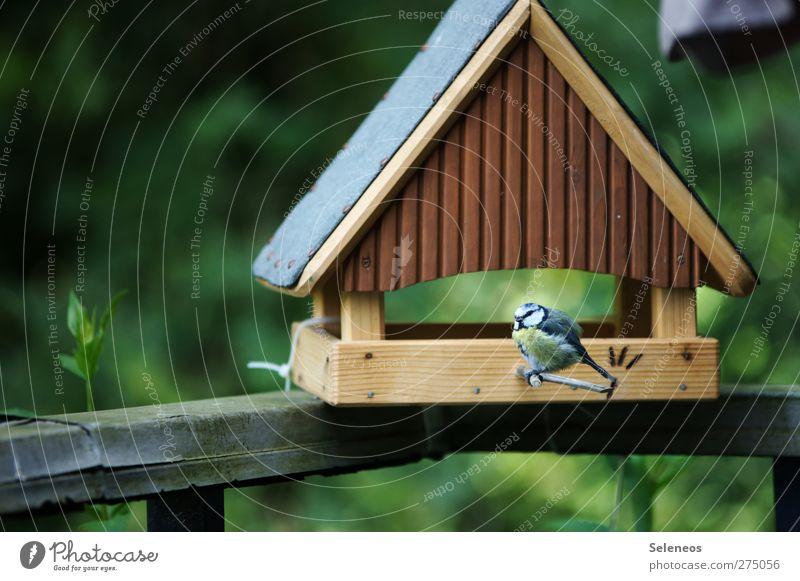 Nature Summer Plant Animal Environment Landscape Spring Garden Bird Beautiful weather Feeding Birdhouse Tit mouse