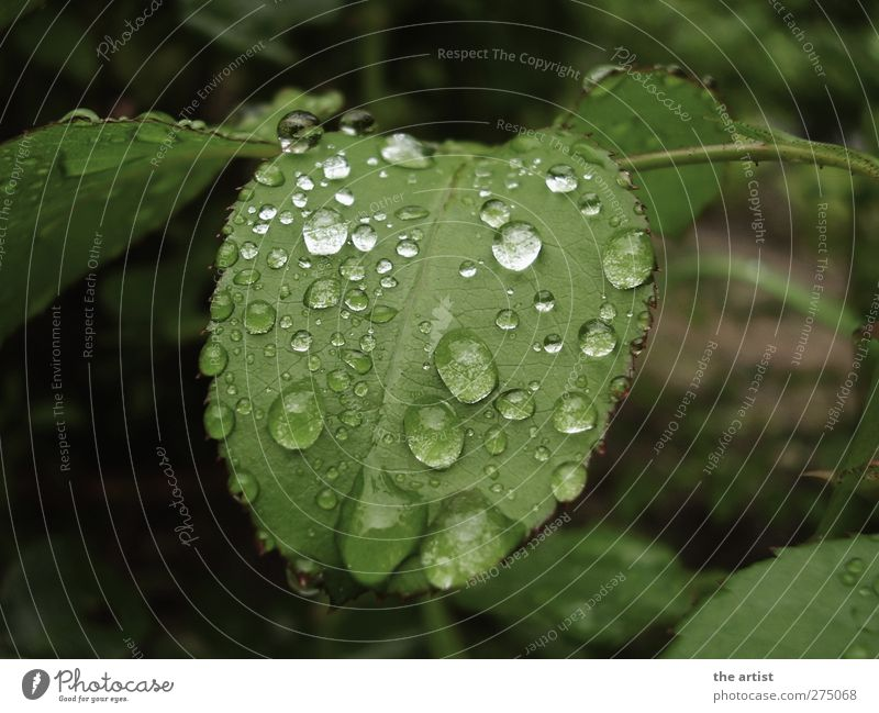 After the rain Nature Plant Drops of water Rain Leaf Garden Fresh Wet Green Subdued colour Exterior shot Day Contrast