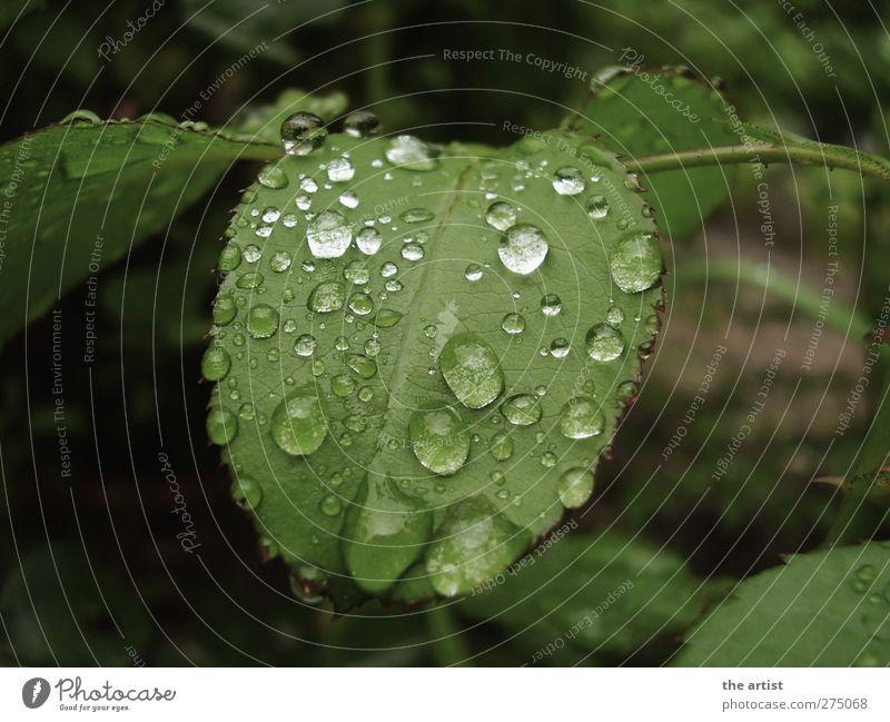 Nature Green Plant Leaf Garden Rain Wet Fresh Drops of water
