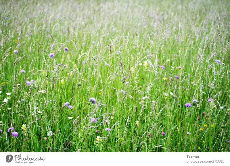 Bloom Environment Nature Plant Animal Spring Summer Flower Grass Blossom Foliage plant Wild plant Garden Meadow Natural Green Beautiful Contentment