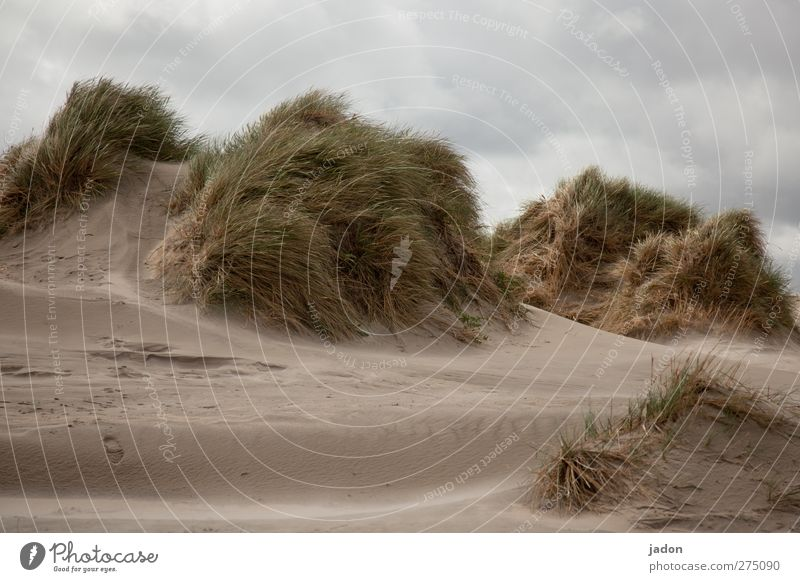 wind in the dunes. Summer Summer vacation Ocean Island Landscape Clouds Grass Bushes North Sea Beach dune Marram grass Sand Loneliness Change Wind Exterior shot