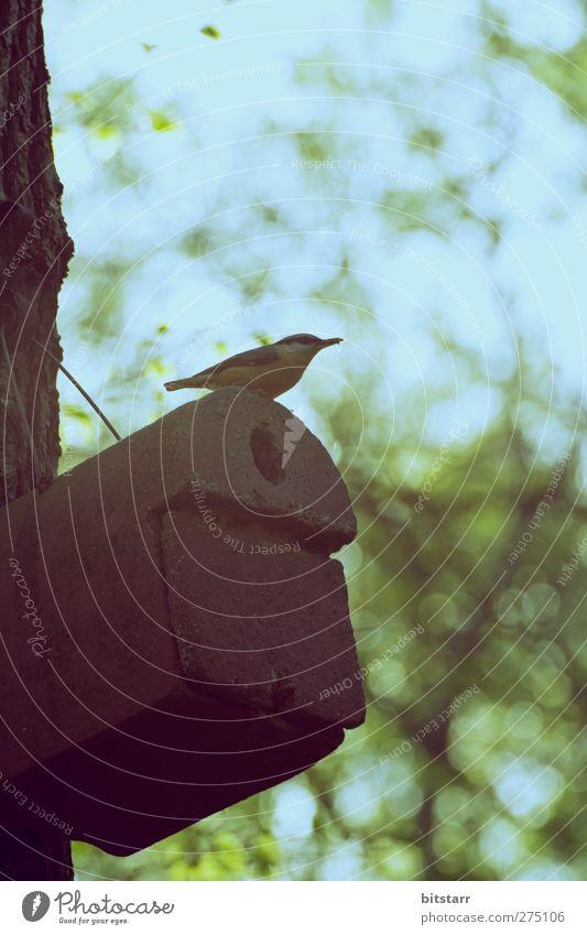 Sky Nature Blue Vacation & Travel Green City Tree Summer Animal Calm Forest Garden Air Bird Park Flying