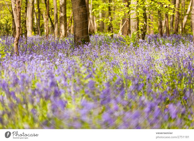 Hasenglöcklein under beech trees Nature Plant Summer Tree Flower Wild plant Forest Fragrance Under Blue Green Romance Esthetic Relaxation Peace Idyll Calm Moody